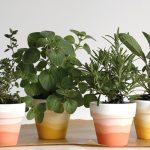 Mini Ombre Herb Pots