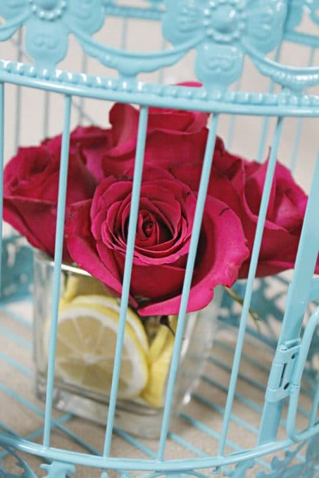Dark pink rose in turquoise cage image.